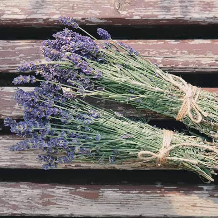 Baak Detailhandel Jacob Hooy Lavendel